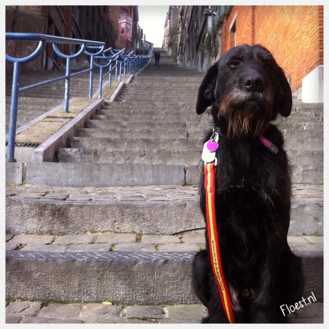 Floest op trappen in Luik